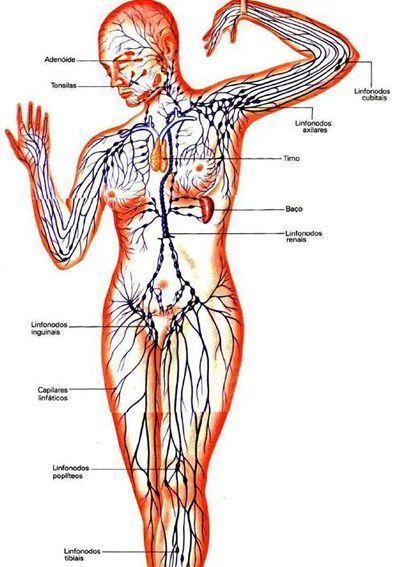 Los asteriscos vasculares el foro