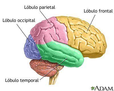 sistema nervioso central FISIOTERAPIA NEUROLOGICA